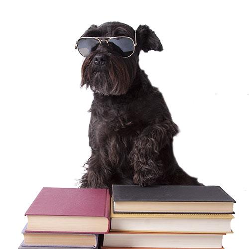 chien-lunettes-162