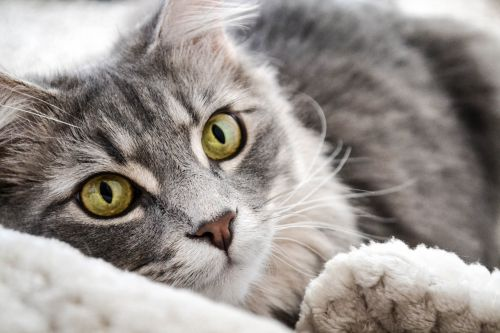 conseils-utiles-veterinaire-chats